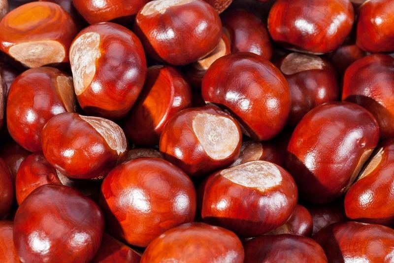 background-of-young-chestnuts-macro