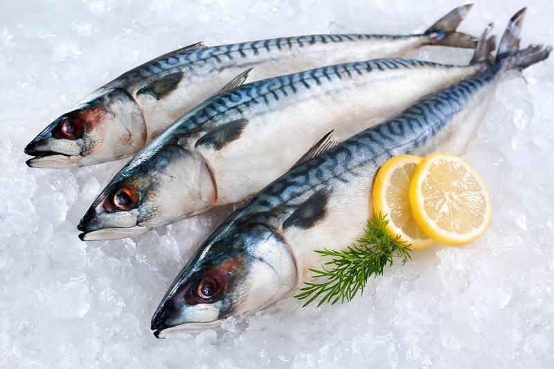 mackerel-fish-on-ice