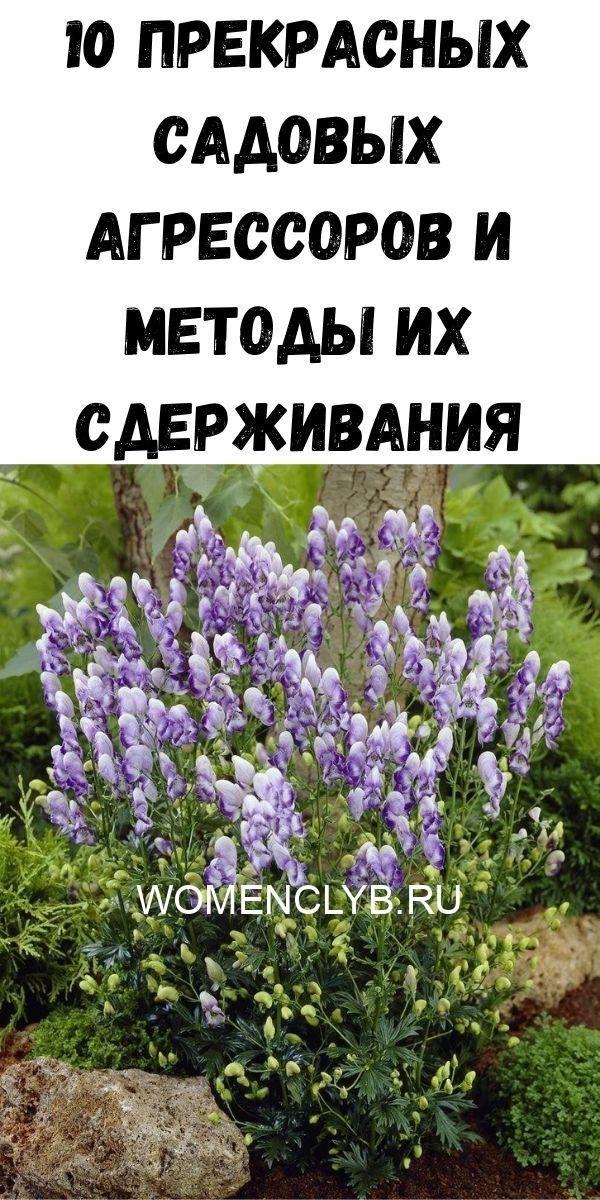 10-prekrasnyh-sadovyh-agressorov-i-metody-ih-sderzhivaniya-9080392