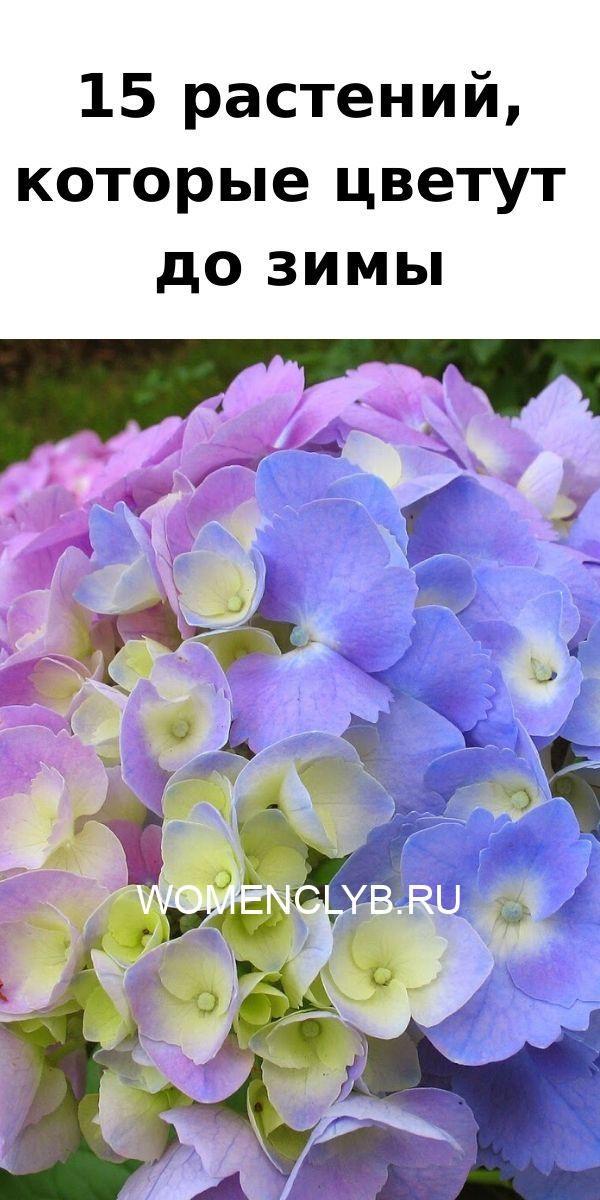 15-rasteniy-kotorye-tsvetut-do-zimy-8340803