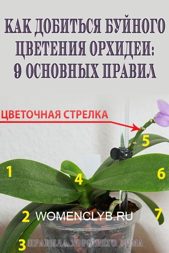 3df47532d03c51e850f4711a818261db-2582489