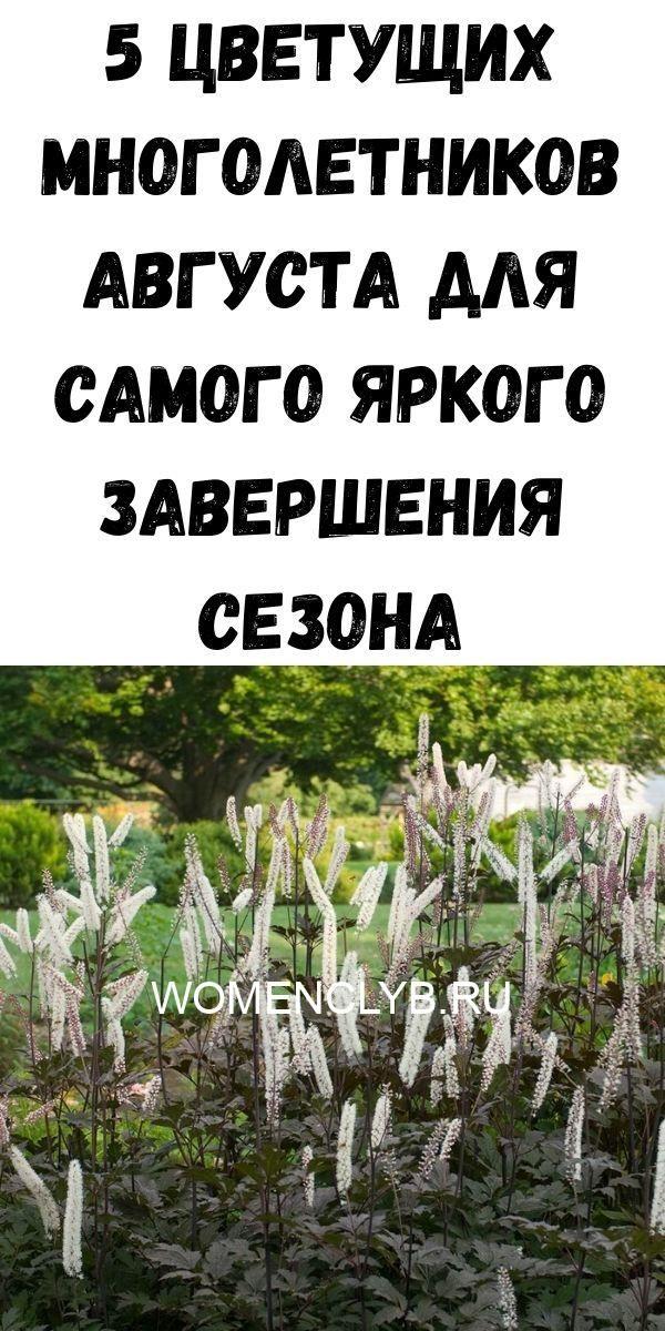 5-tsvetuschih-mnogoletnikov-avgusta-dlya-samogo-yarkogo-zaversheniya-sezona-6717749