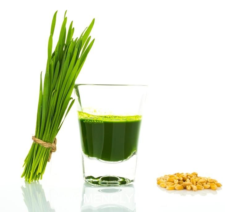 shot-glass-of-wheat-grass-with-fresh-cut-wheat-grass-and-wheat-g