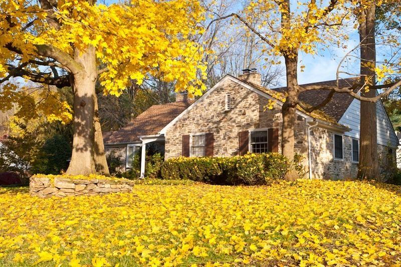 house-philadelphia-yellow-fall-autumn-leaves-tree