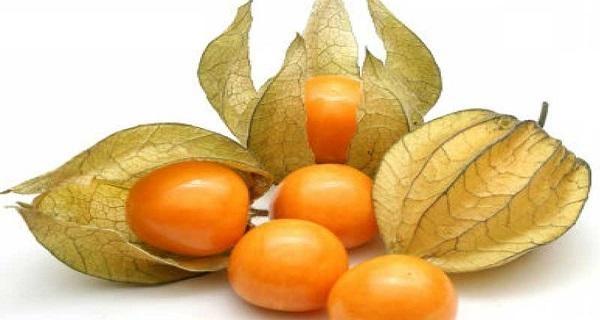 cape-gooseberry-fruit-images-8393928