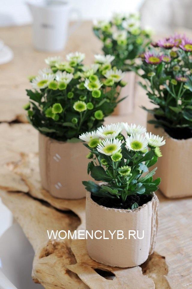 chrysanthemum-01-640x960-1-3797658