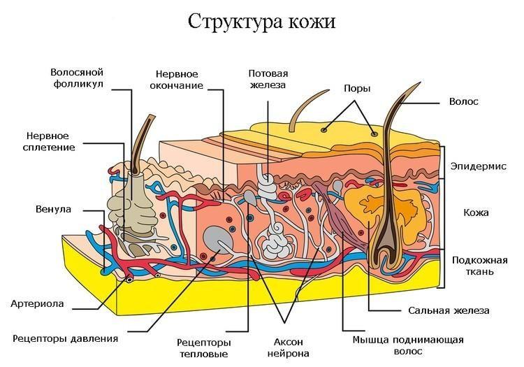 content_podtyazhka_litsa_i_tela_v_domashnih_usloviyah11-6404617