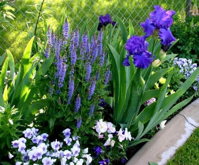garden-05-640x531-1-8314867