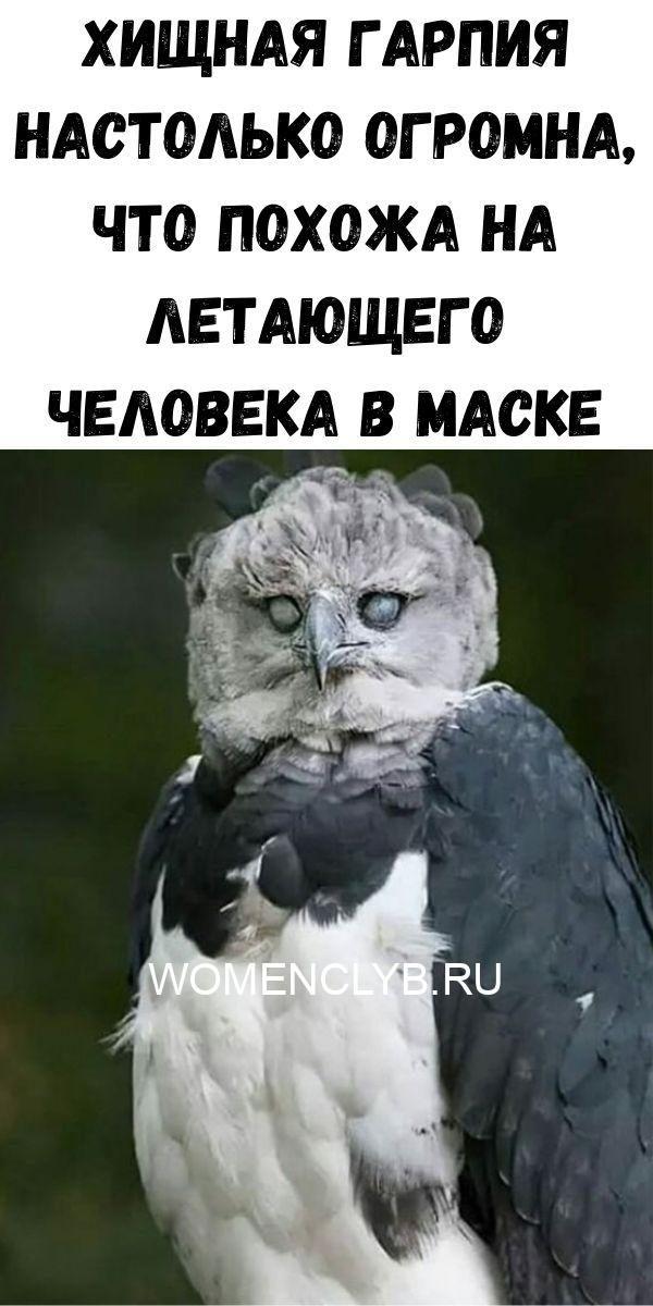instruktsiya-po-prigotovleniyu-vanilnogo-smetannika-66-9383883