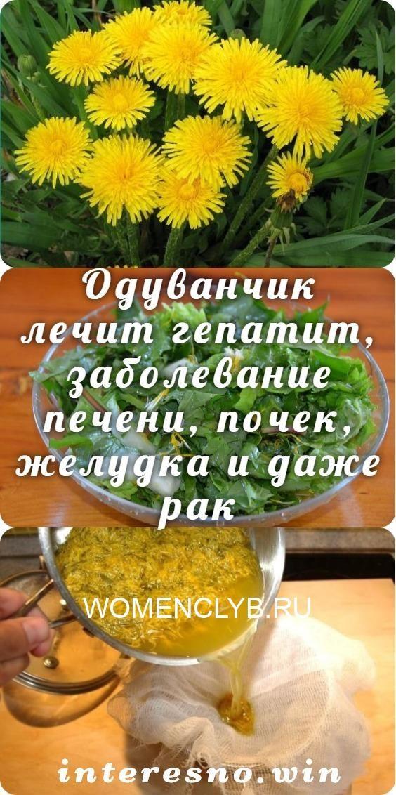 oduvanchik-lechit-gepatit-zabolevanie-pecheni-pochek-zheludka-i-dazhe-rak-8474404