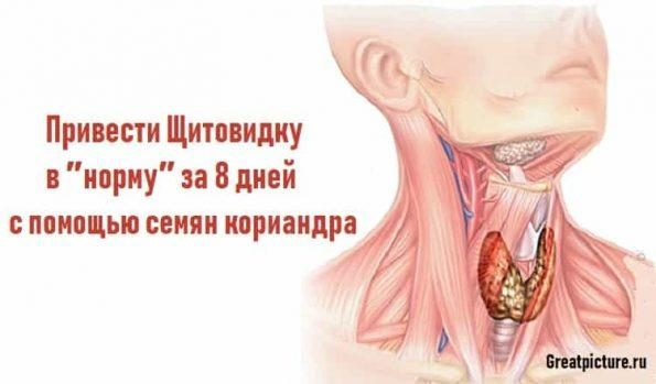 shitovidka-min-595x349-1-9386682