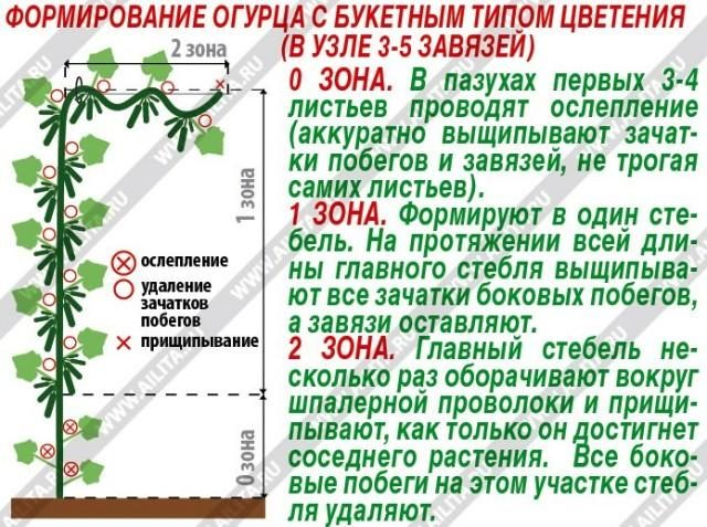 urozhainye-ogurtcy-2-640x477-1-9345162