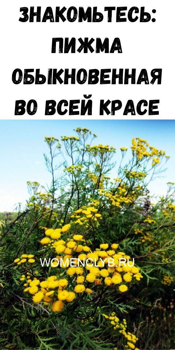 znakomtes-pizhma-obyknovennaya-vo-vsey-krase-3077319